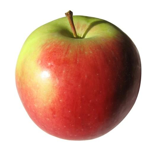 Foto-appel